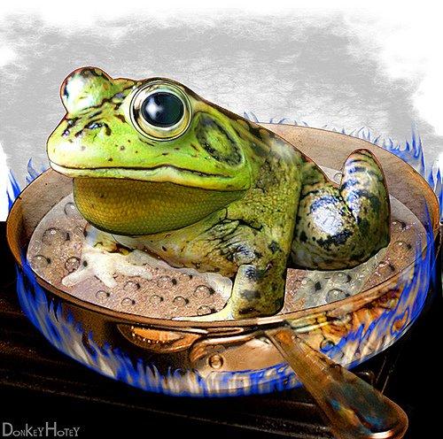 frog boil photo